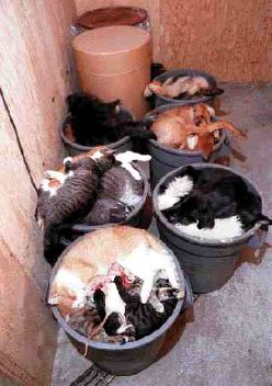 Euthanized Cats Dogs Livestock Feed